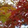 すこし早い秋