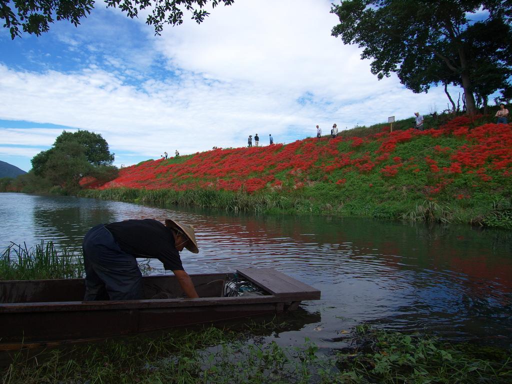 漁師と彼岸花
