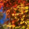 秋色に・・