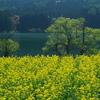 春の北竜湖