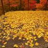 赤・黄、秋色