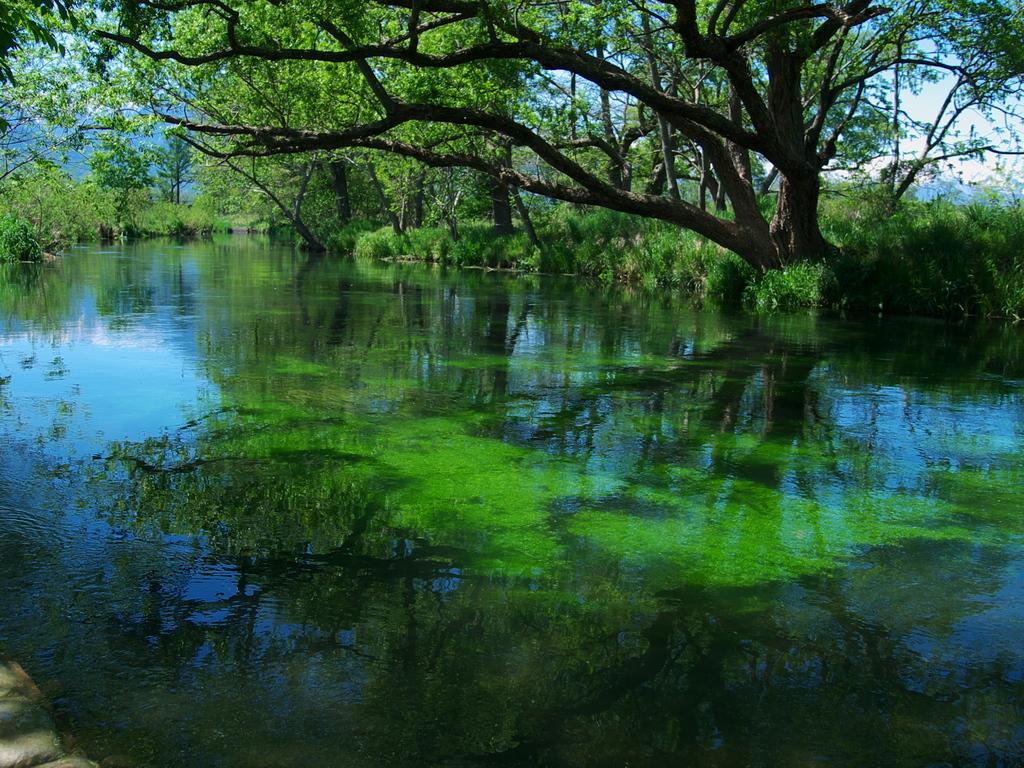 新緑の北アルプス湧水