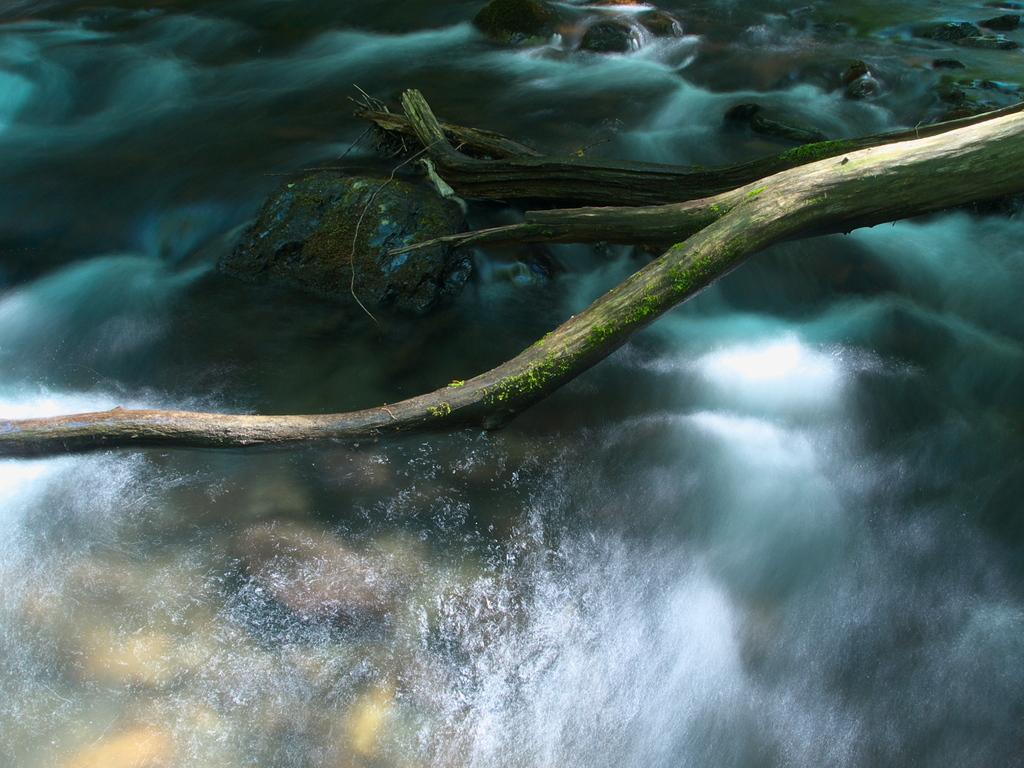 輝く横川の流れ
