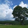 開田の一本木