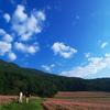赤蕎麦の大地