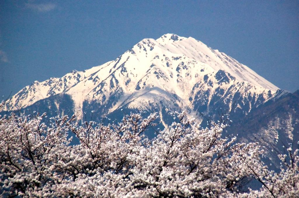 桜の常念岳