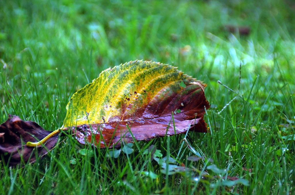 舞い降りた秋