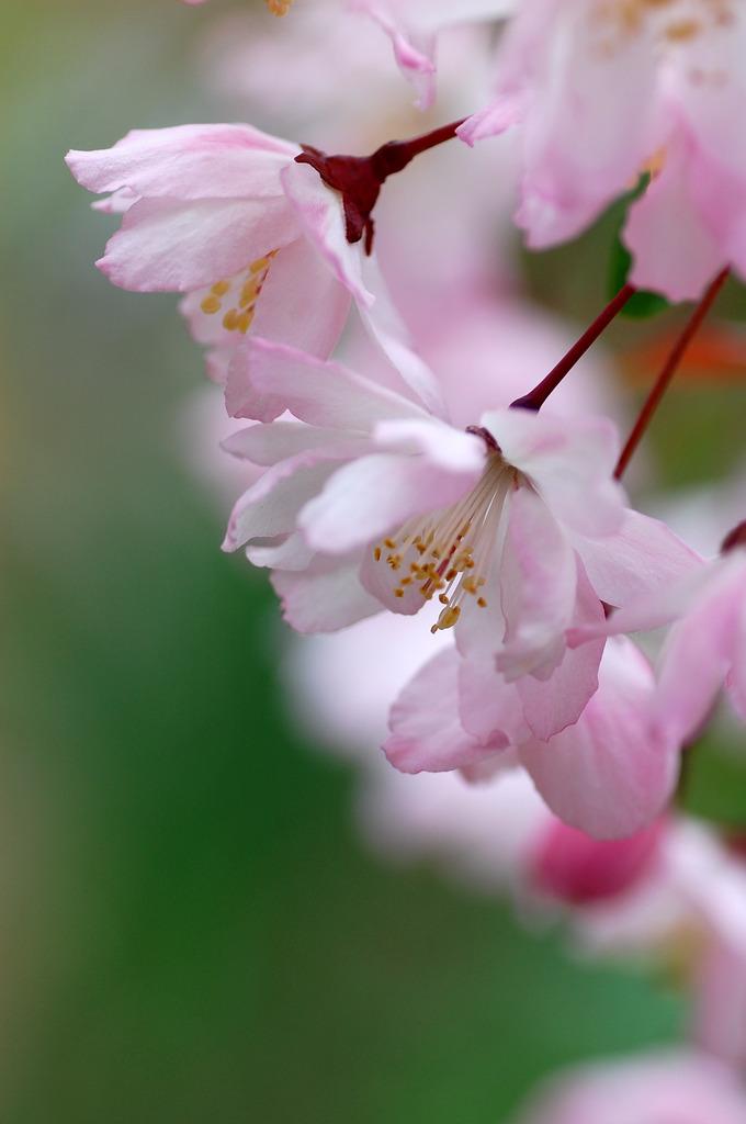 花かいどう