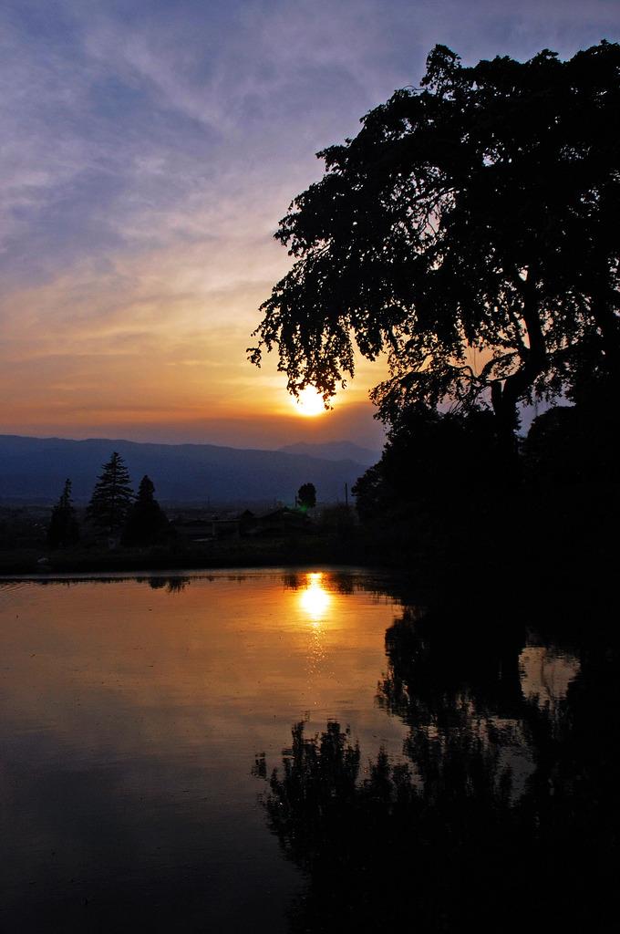 水田に沈む夕日