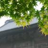 雨の総持寺