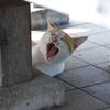 長命寺の野良猫