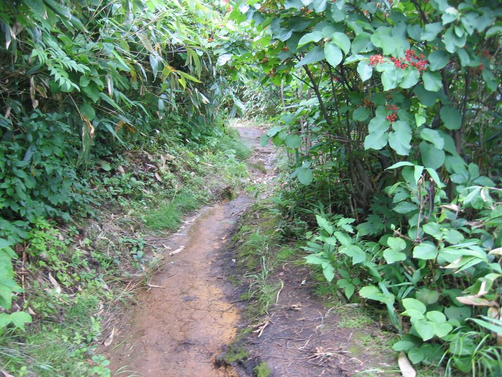 熊の出る山道