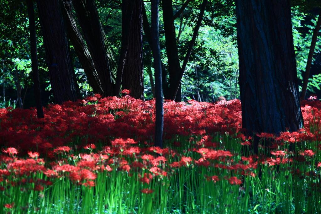 妖艶の赤7