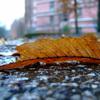 寒空下の落ち葉