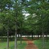 モエレ沼公園9