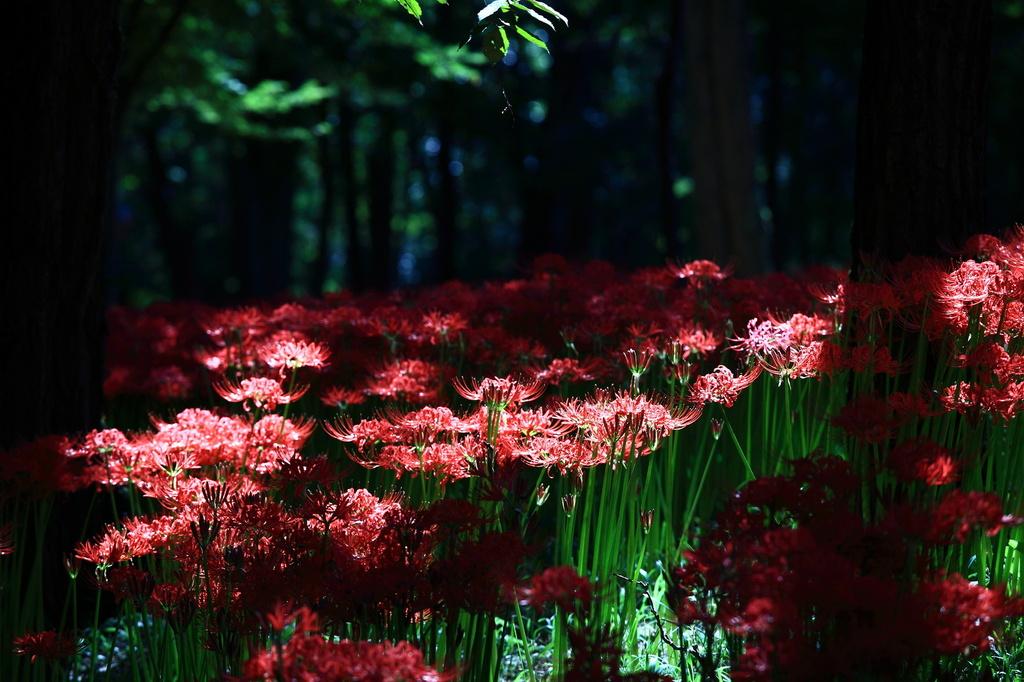 妖艶の赤2
