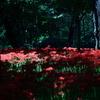 妖艶の赤8