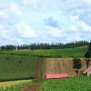 メルヘンの丘/赤い屋根の家1
