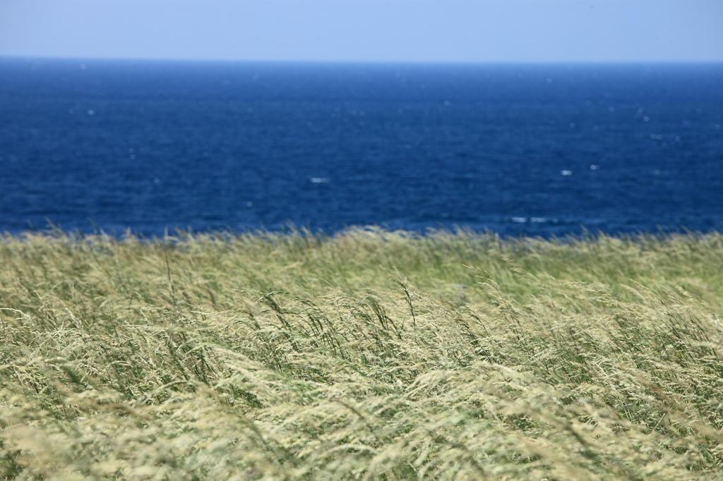 海風と草原