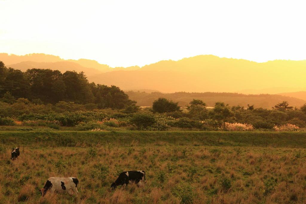 道端の牧場で