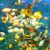八景島シーパラダイスの熱帯魚たち
