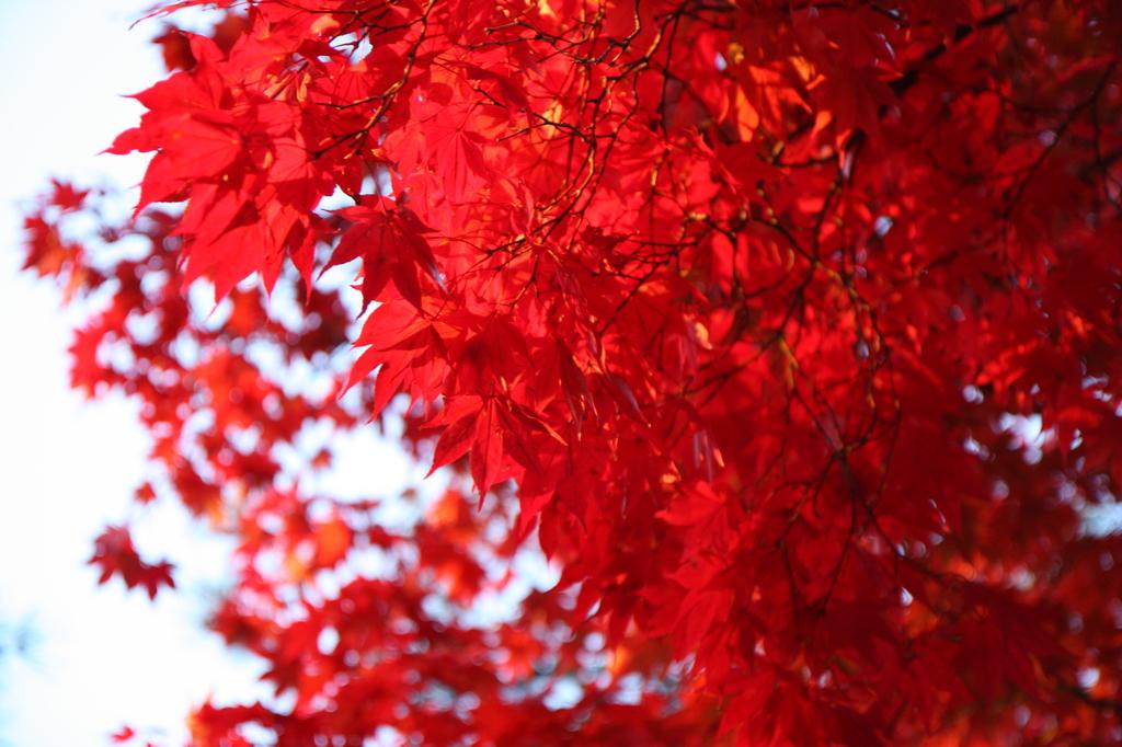 とても赤い
