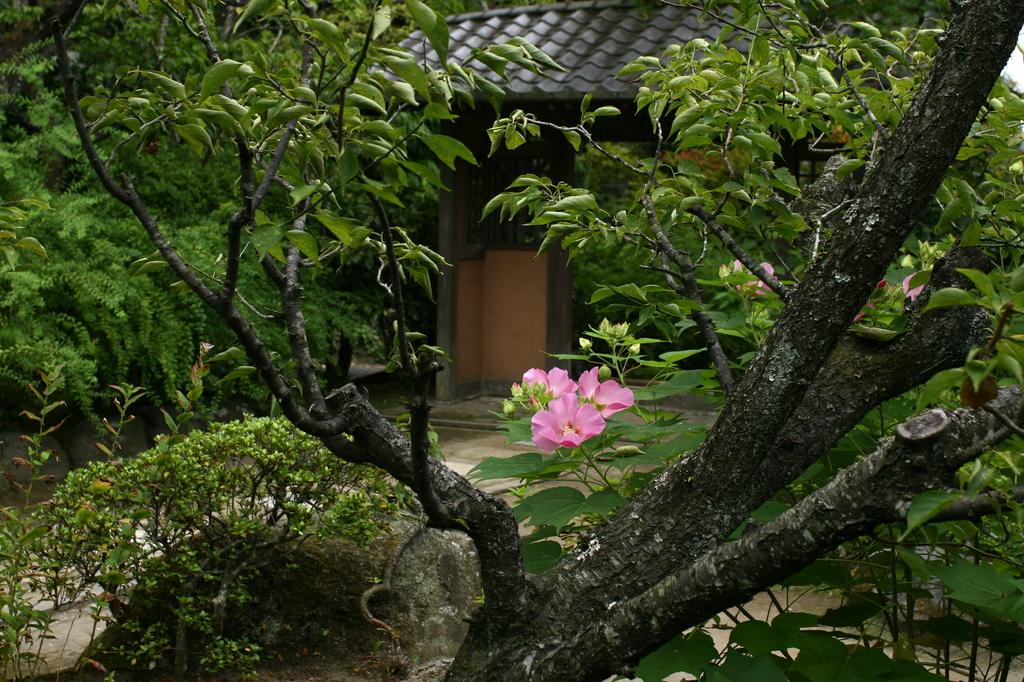 海蔵寺の芙蓉