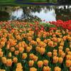 Spring Magic Garden