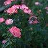 花霞の季節