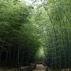 都会の中の竹林