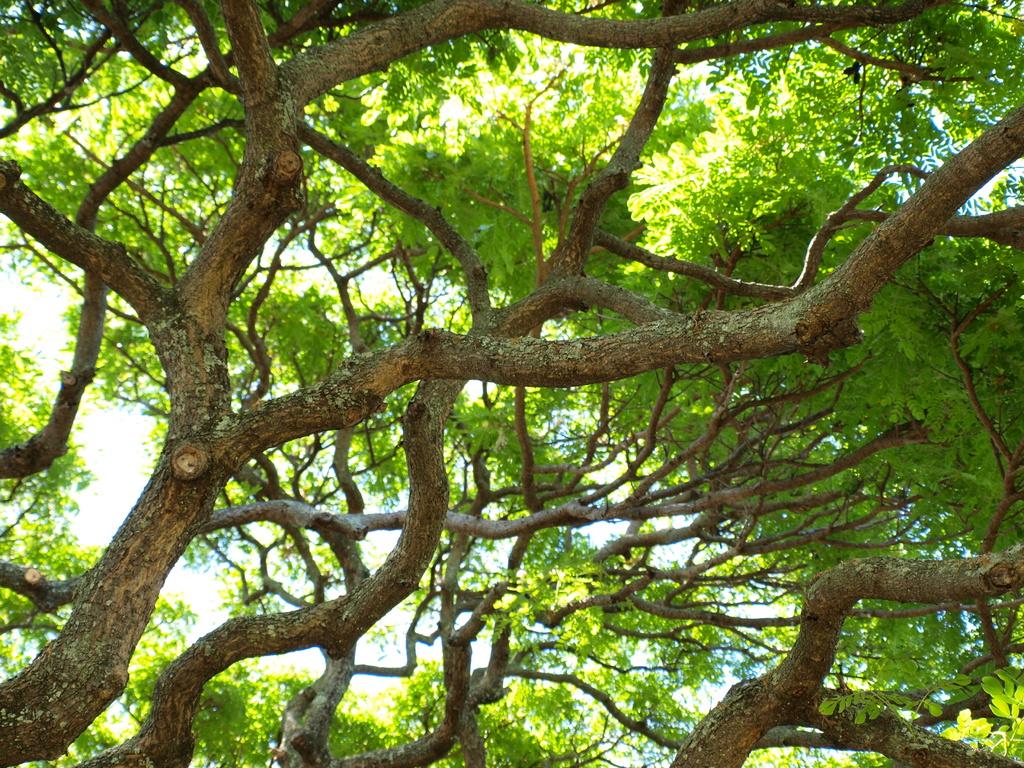 このぉ~木なんの木(内側)