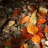 瑞々しい紅葉