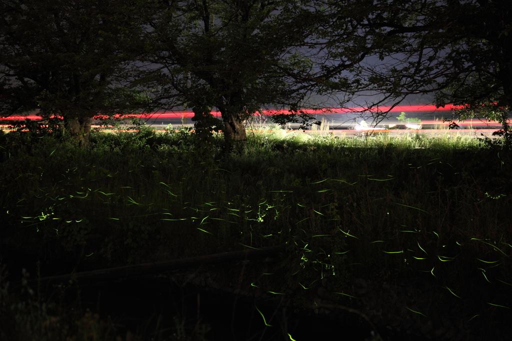 ホタル 3 光の共演