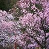 散策した先に見つけた春の姿