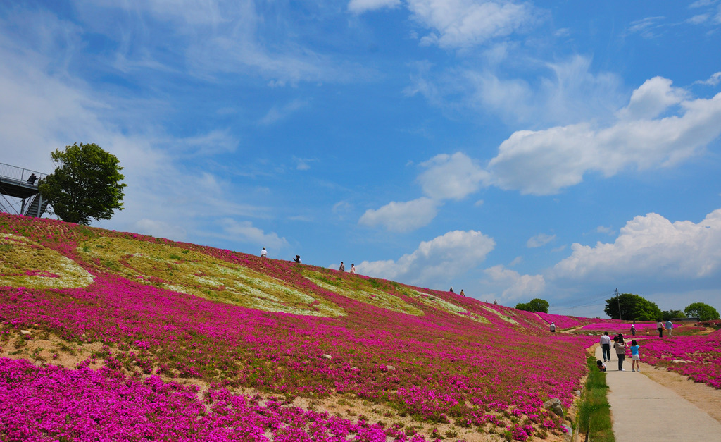 芝桜 花夢の里 ロクタン