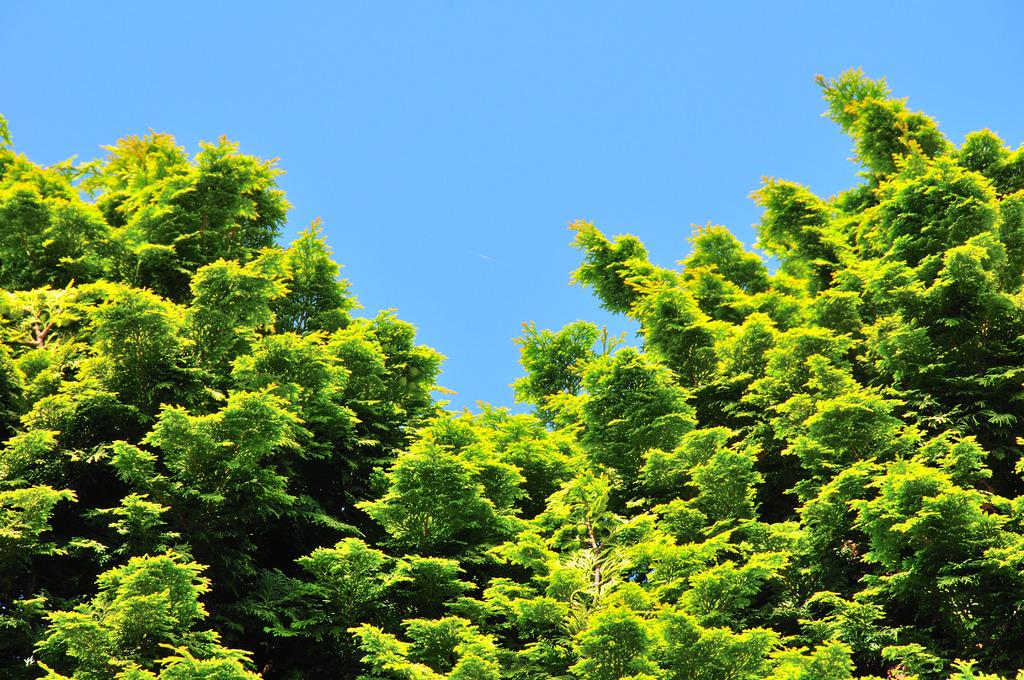 森に見える木