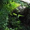ミニマム原生林