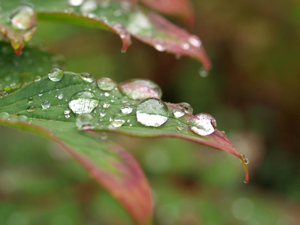 雨のたまご。
