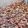 道の落ち葉