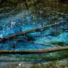 森の奥の小さな蒼い池②