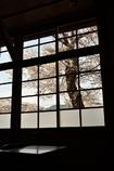 なつかしの学び舎 上岡小学校⑦教室の窓の外は桜色