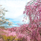 櫻の園の満開の下で