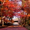 京、秋頃(毘沙門堂)