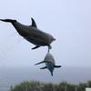 海豚が空を飛ぶ〜♪