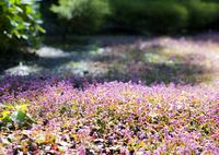 SONY ILCE-7RM2で撮影した(秘密の花園)の写真(画像)