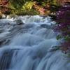 つつじと竜頭の滝