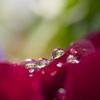 雨の日の楽しみ6