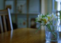 MAMIYA RZ67 PROFESSIONALで撮影した(春を待つ)の写真(画像)