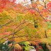 本土寺の紅葉 (ヘ)