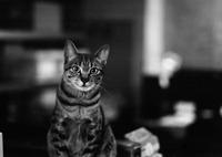 MAMIYA 645AFDで撮影した動物(.)の写真(画像)